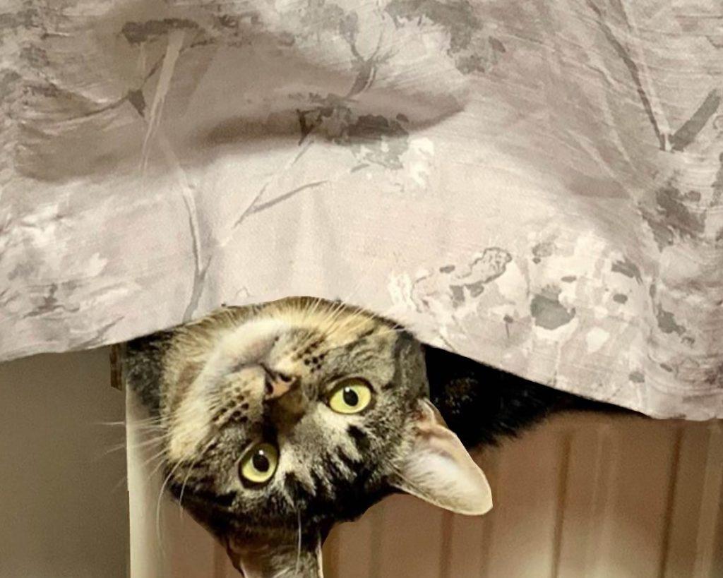 cat beneath a sheet
