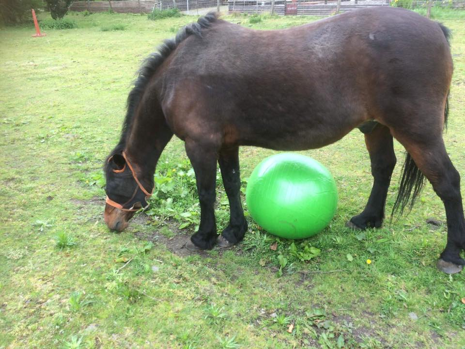 bay horse with big green ball